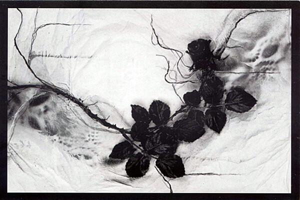 Studio Stefania Miscetti | Exhibitions / Projects | Adrian Tranquilli
