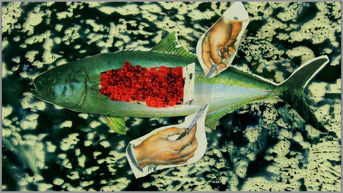 Payal Kapadia, Weapons of Mass Destruction, 2011, still