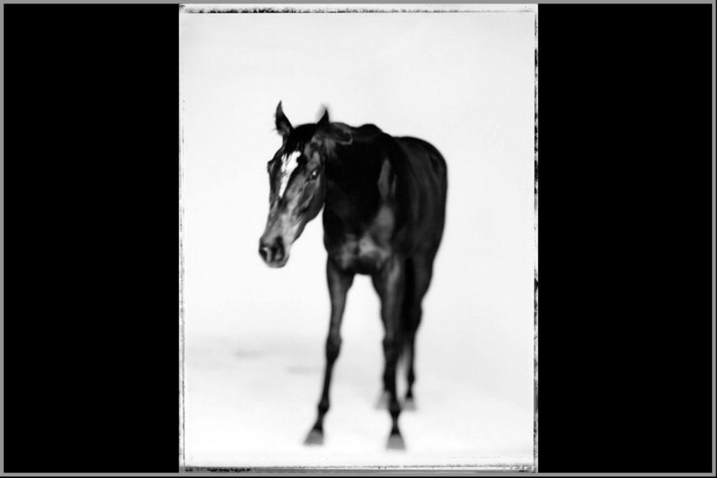Marco Delogu, Uva rara, 2007, black and white inkjet print, 100x130 cm
